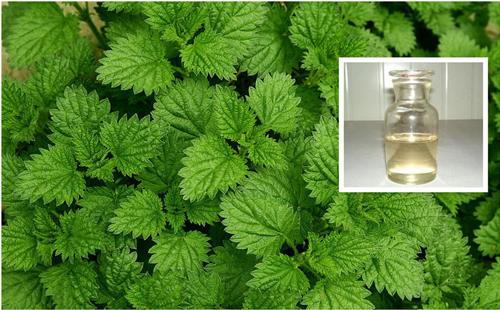 薄荷油 mint oil.jpg