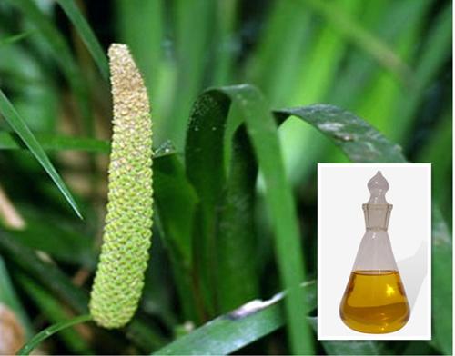 石菖蒲油 Acorus gramineus oil.jpg